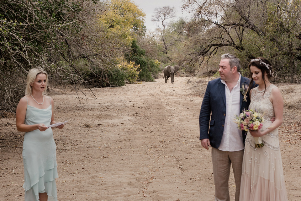 wedding with game, wedding elephant, wedding ceremony african elephant