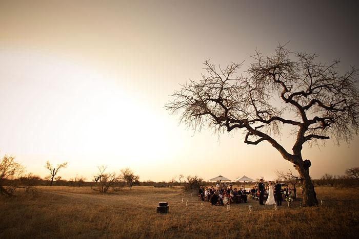bushveld wedding lead tree